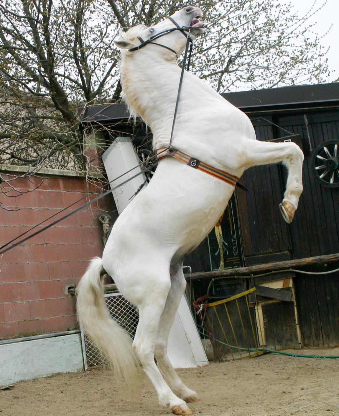 Il campo degli scout si trasforma in rodeo con i cavalli imbizzarriti - Cavalli allo specchio ...