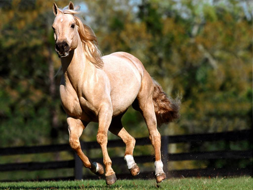 Fa sesso con un cavallo 3 anni di carcere - Avere un cavallo ...