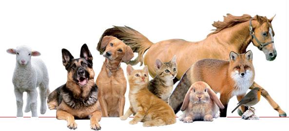 Manifesto per gli animali sottoscrivilo anche tu for Rettili domestici