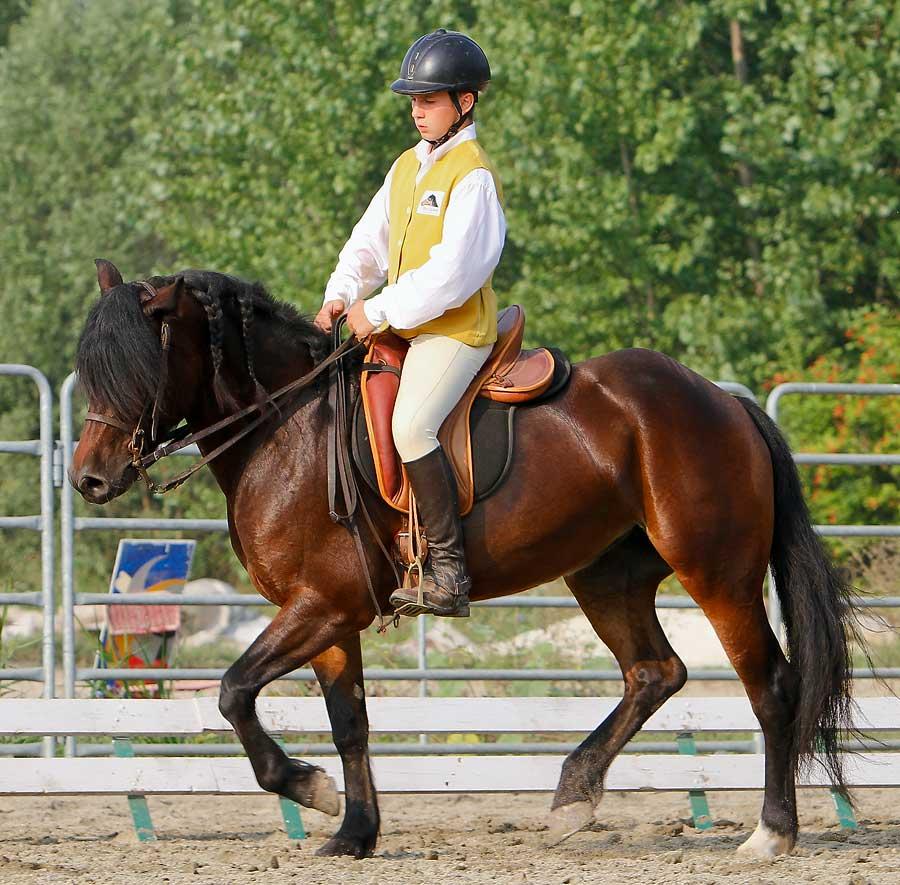 Il cavallo bardigiano paladino dell 39 inclusione sociale - Cavalli allo specchio ...