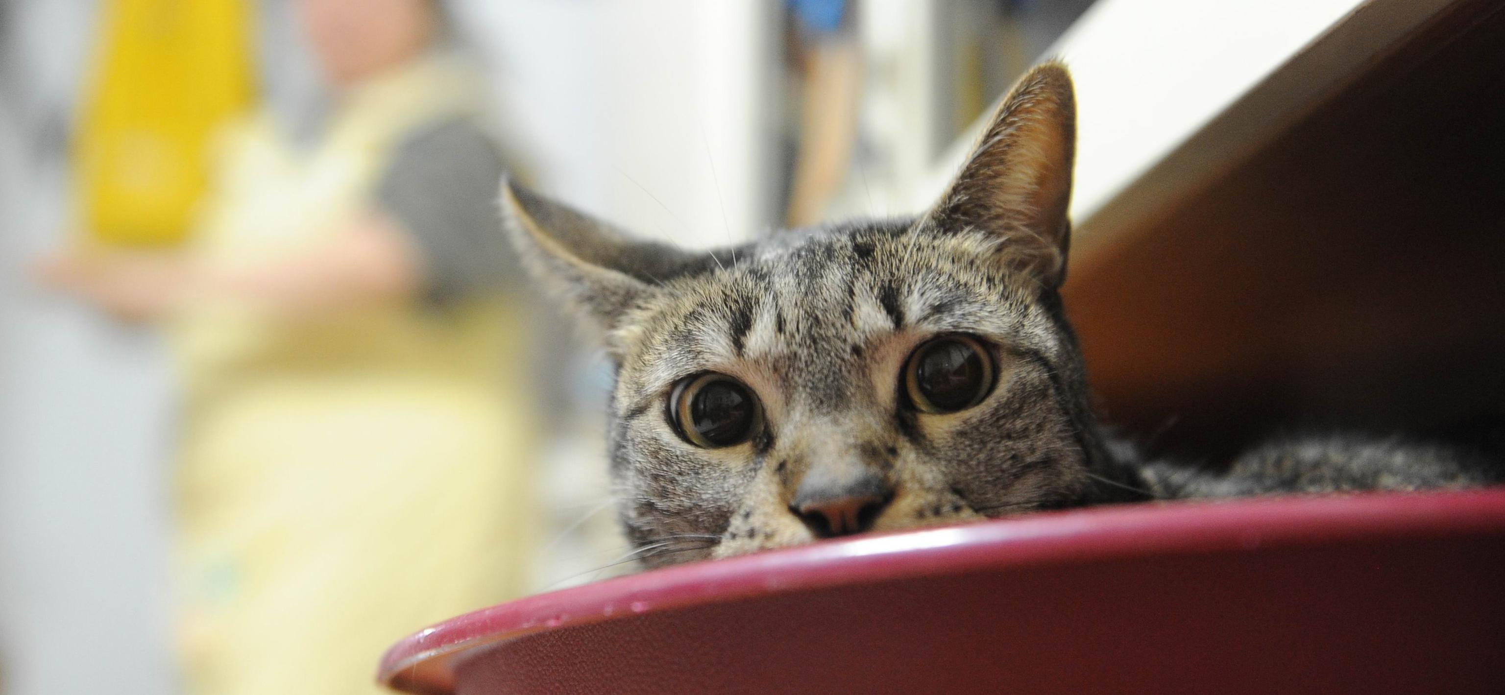 Specchio Sagomato Gatto Silvestro : Anche i gatti si deprimono colpa dei guai di famiglia
