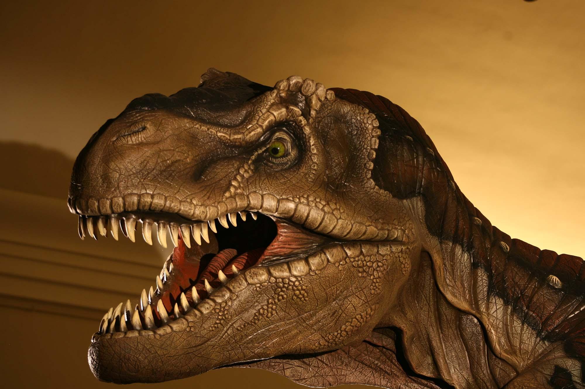 Il ruggito del tirannosauroe le fauci del gigantosauro - Immagini di dinosauro da colorare in ...