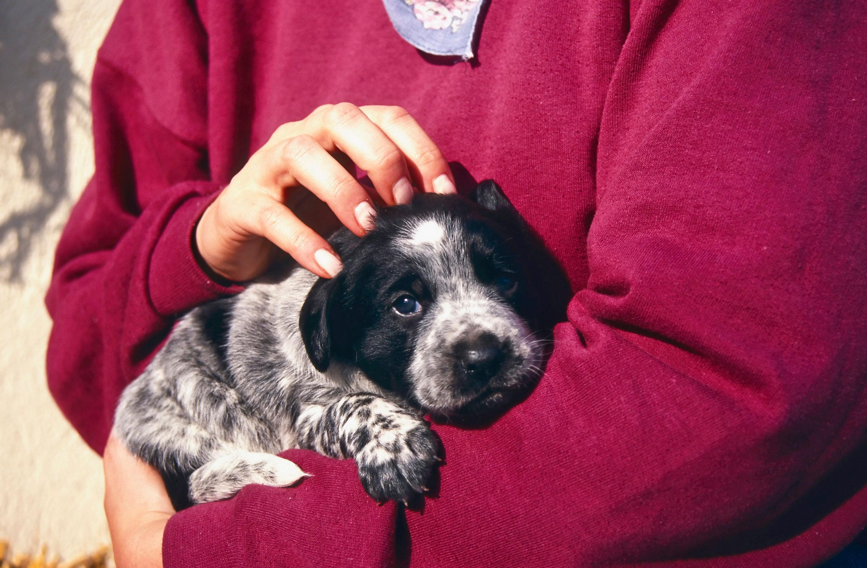 Volete far imbestialire il cane trattatelo da essere umano - Cane allo specchio ...