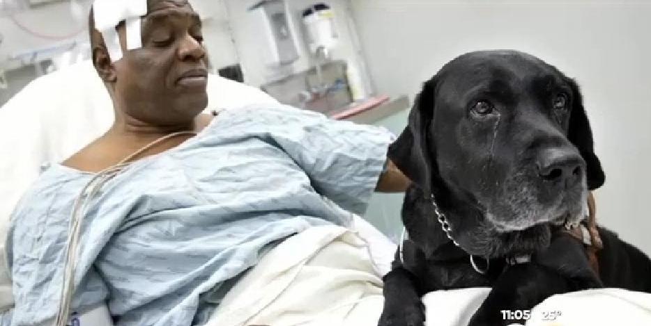 Il cane che tutti vorrebbero salva il padrone e lo fa ricco - Cane allo specchio ...