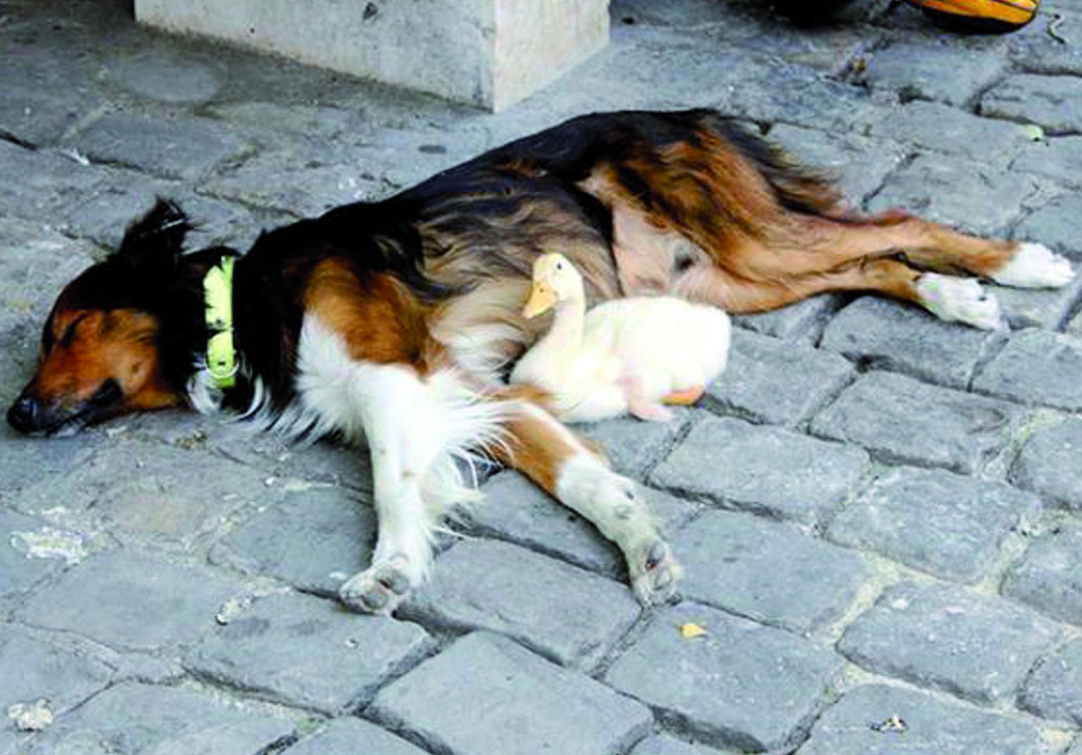 Il cane e la paperella coppia innamorata che commuove parigi - Cane allo specchio ...
