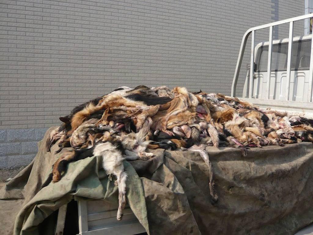 Pellicce animali usati