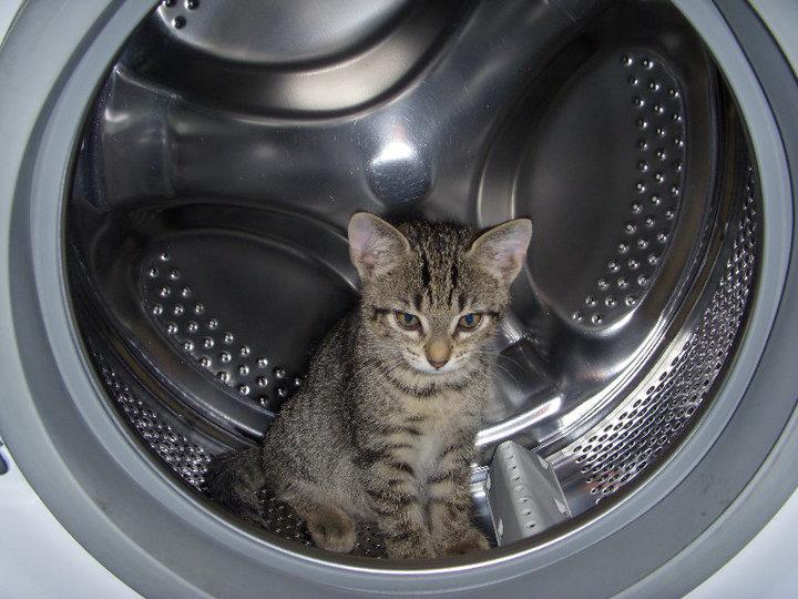 Olbia uccide un gatto mettendolo nella lavatrice condominiale for Mini lavatrice