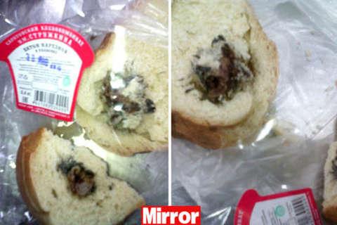 Compra il pane dal fornaio lo taglia e trova un topo - Come catturare un topo in casa ...
