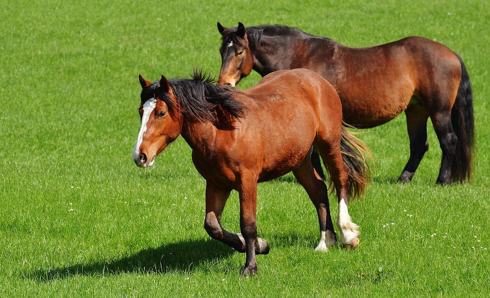 Lega del cane e progetto islander nessuna tutela per i cavalli di agropoli - Cavalli allo specchio ...