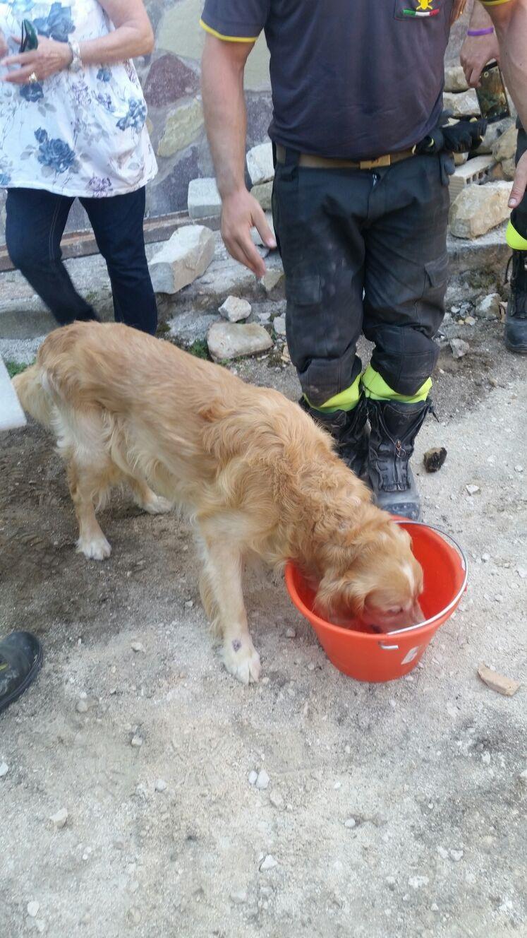 A Brescia la 'banca dati del sangue' che salva i cani