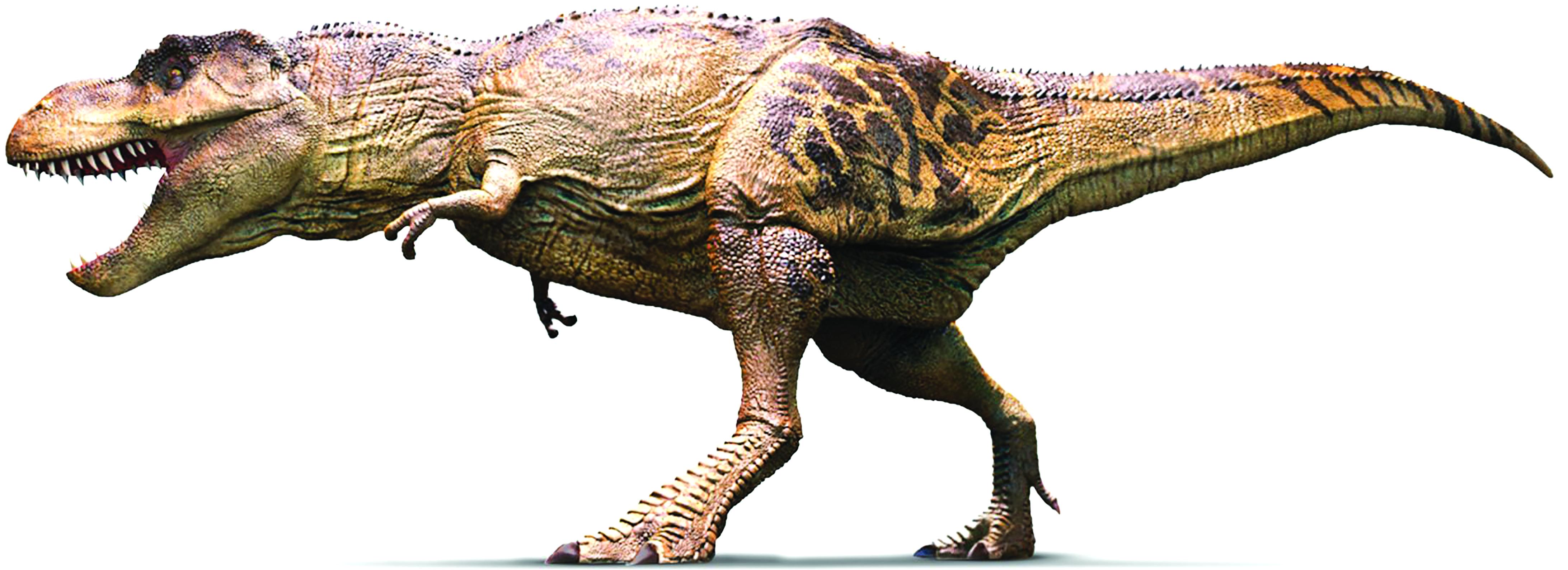 Il cranio di un T-Rex ritrovato tutto intero: pesa una tonnellata