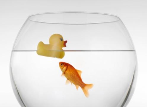 Pesce rosso ingoia un sassolino i veterinari lo salvano for Acquario per pesci rossi usato