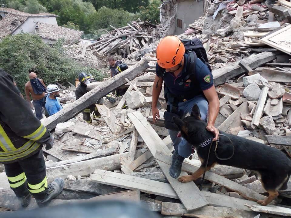 Premiati per il coraggio i cani eroi del terremoto