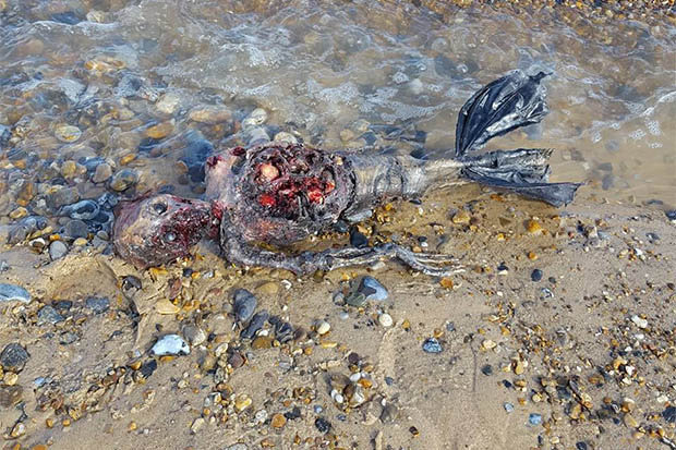 """Pescatore trova sulla spiaggia una creatura misteriosa: """"È una sirena"""""""
