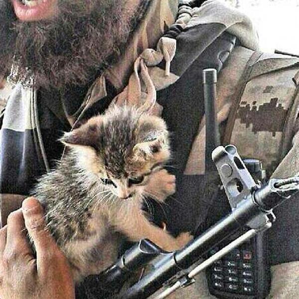 """L'ultima follia dell'Isis: """"Sterminate tutti i gatti"""""""