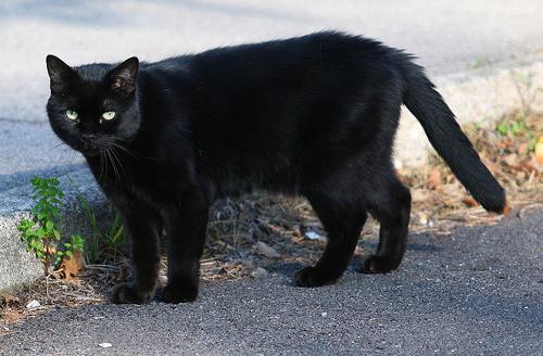 """""""Gatto nero Day"""" contro tutte le superstizioni"""