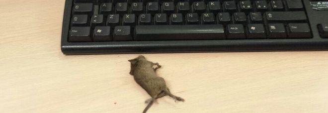 Roma, trovato topo morto sulla scrivania di un ufficio dell'Anagrafe