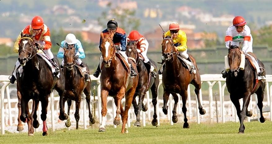 Ippica a gambe all 39 aria sono stati i politici ad azzoppare i cavalli - Cavalli allo specchio ...
