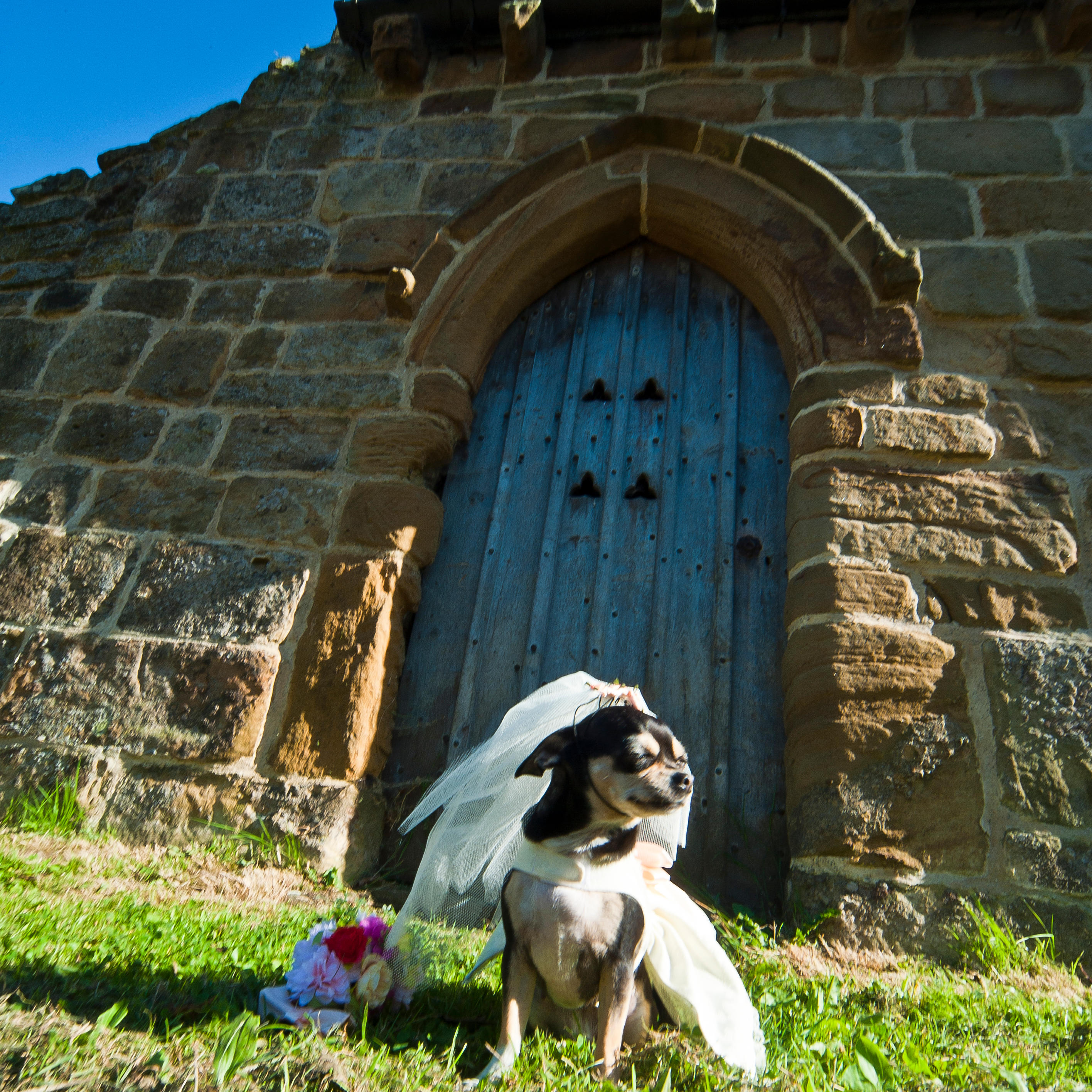 Mi sposo ma voglio il cane animali in chiesa polemica - Cane allo specchio ...