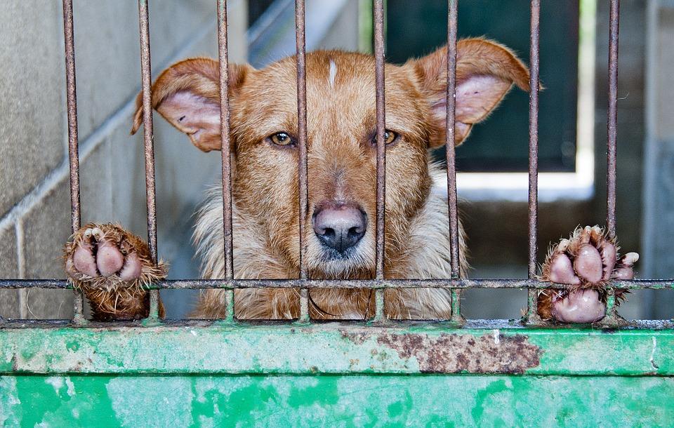 Cina al festival di yulin vietato vendere carne di cane - Cane allo specchio ...