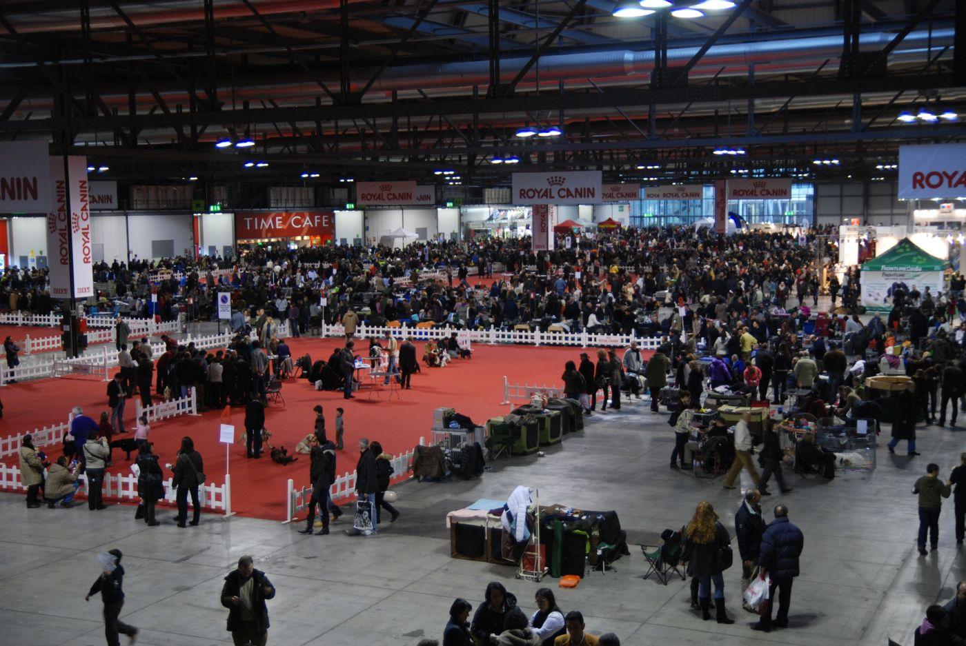 Gare e concorsi la carica dei 10mila cani in fiera for Rho fiera eventi oggi