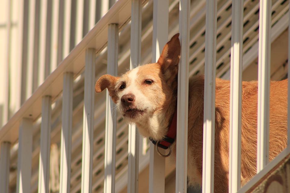 Salerno investe il cane e rischia il linciaggio - Cane allo specchio ...
