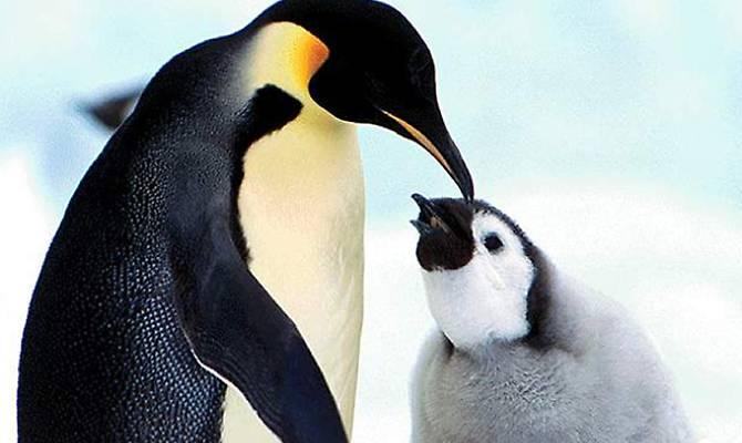 In antartide la pioggia fa una strage di pinguini - Pinguini di natale immagini ...