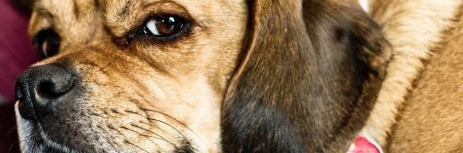 Ammazza le galline e strozza il cane dei vicini - Cane allo specchio ...