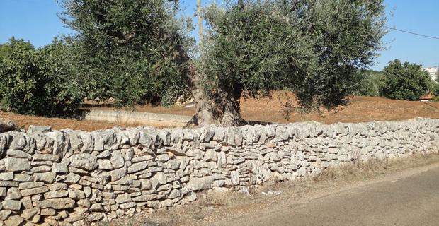 Melendugno i no tap danneggiano gli antichi muri a secco - Terrazzamenti giardino ...