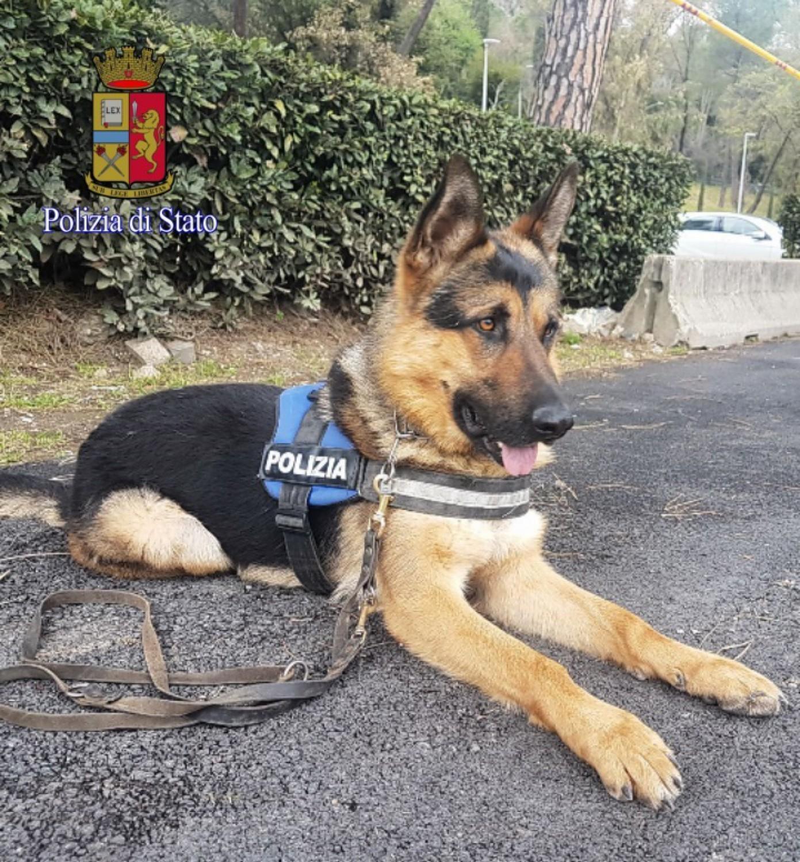 Ares il cane randagio diventa poliziotto - Cane allo specchio ...