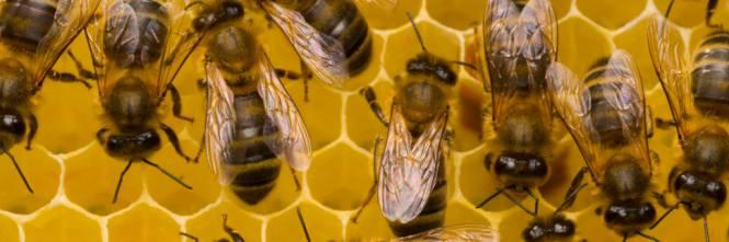 Quei pesticidi che salvano gli ulivi e uccidono le api