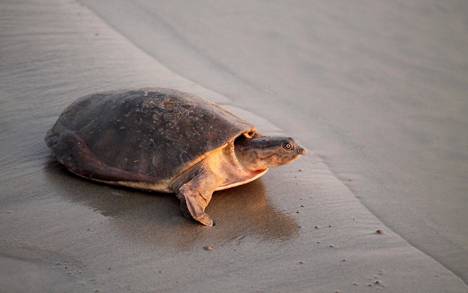Patto nel piccolo villaggio uniti per proteggere le for Lago per tartarughe