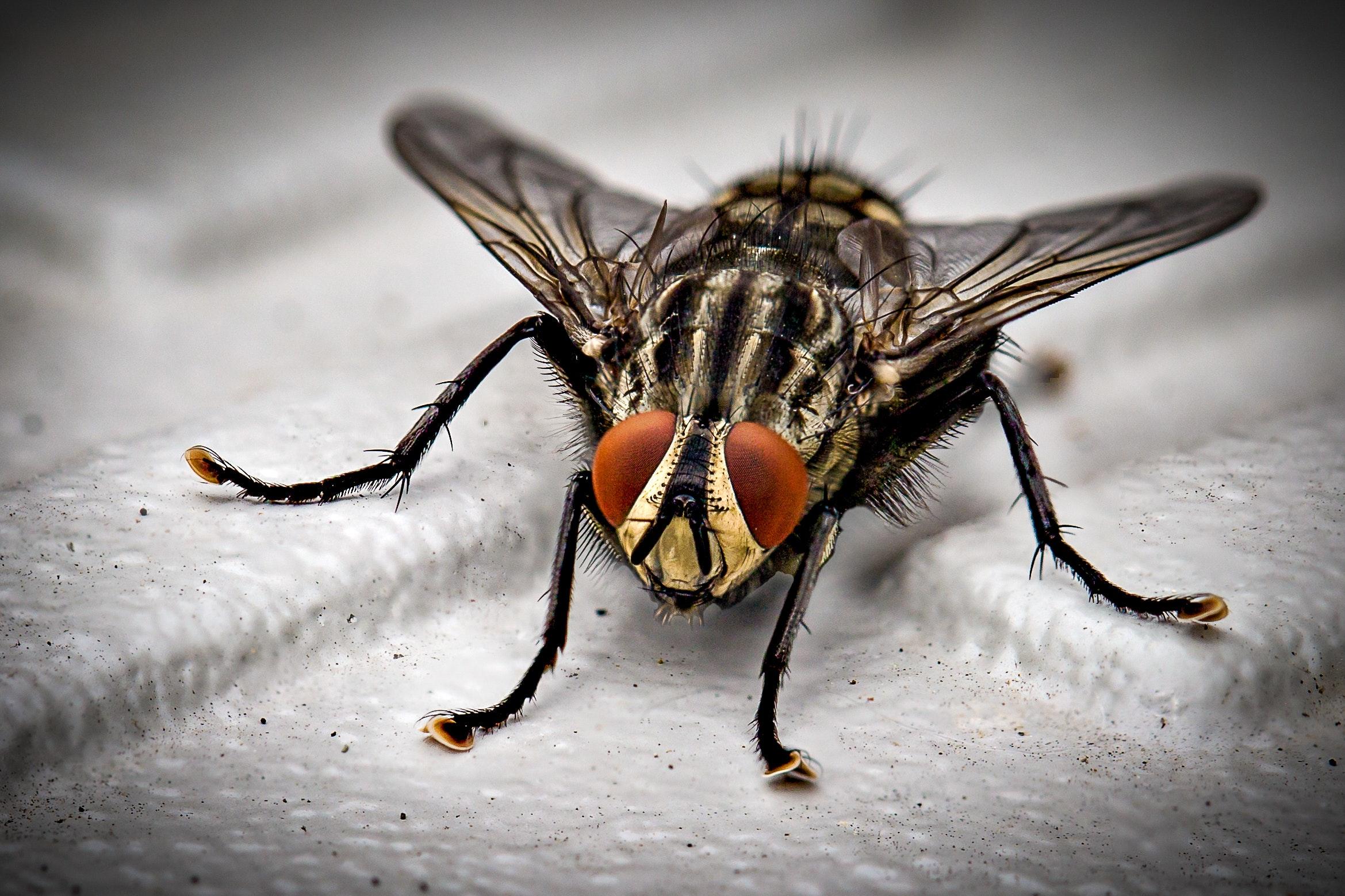 fame nel mondo: si combatte mangiando insetti