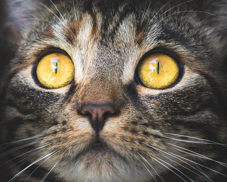 Calendario Eta Gatti.Il Consiglio Utile Osservate Il Gatto Che Non Ha Eta