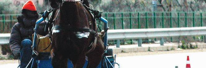 Cavalli fantasma dopati e usati per le corse illegali - Cavalli allo specchio ...