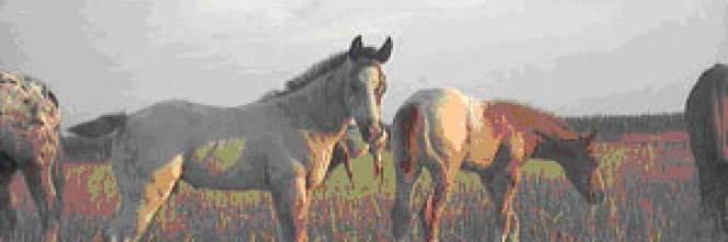 Psicologia del cavallo - Cavalli allo specchio ...
