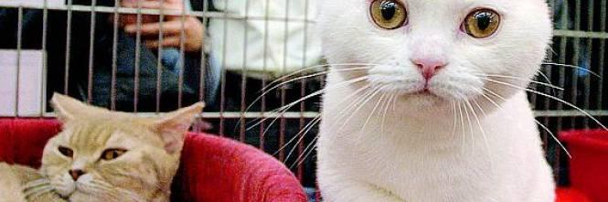 spese mediche gatto