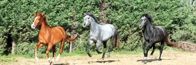 Quei cavalli maltrattati salvati da una fotografia - Cavalli allo specchio ...