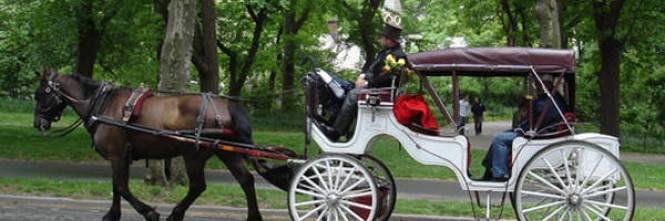 Usa giro di vite contro le carrozzelle coi cavalli - Cavalli allo specchio ...