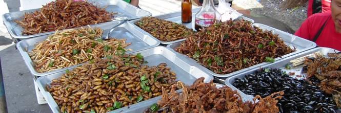 Così si mangerà domani: insetti contro la fame