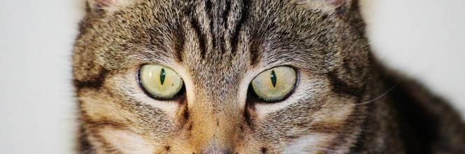 Specchio Sagomato Gatto Silvestro : I vip lasciano l eredità al gatto le regole per il