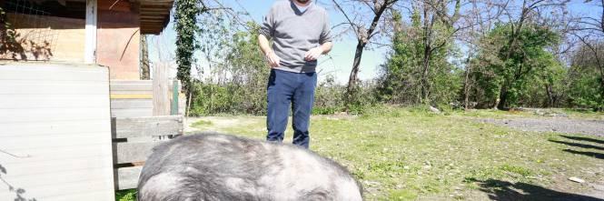 Salvini alle prese con un maiale nel campo Rom 1