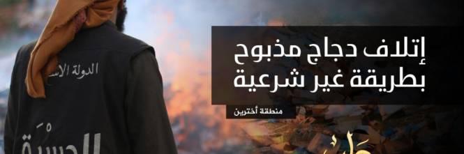"""L'Isis brucia il pollo destinato ai profughi: """"È macellato negli Usa"""" 1"""