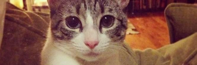 Roux, la gatta nata con due zampe 1