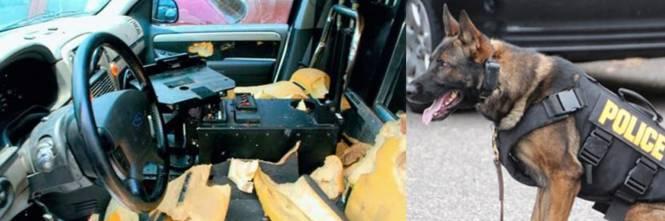 Quei Cani Poliziotto Abbandonati In Auto E Morti Per Il Caldo