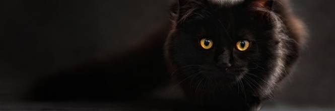 Gatto nero, foto 1