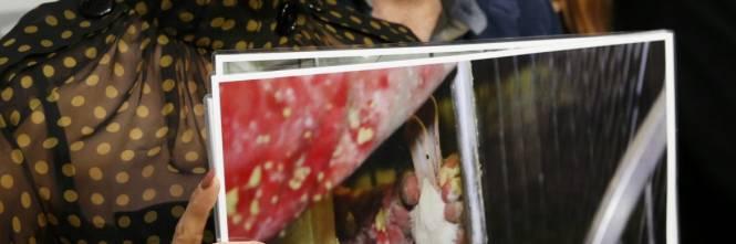 Pamela Anderson contro il foie gras 1