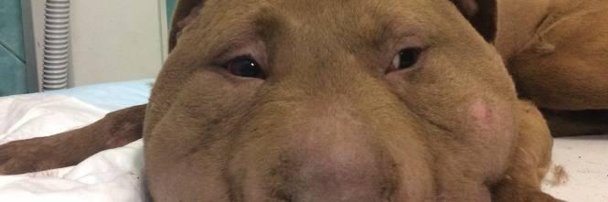 Oristano cane decapitato con corda sul collo i segni - Cane allo specchio ...