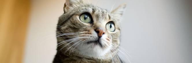 Perché I Gatti Saltano Dopo Aver Defecato Ilgiornaleit