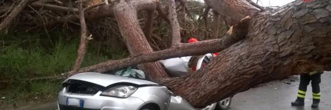 Maltempo a Roma, cade albero su auto 1